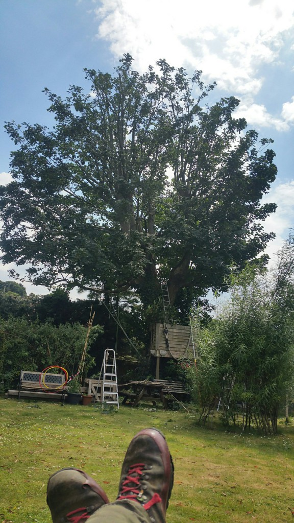 Modern standard sail reduction….sycamore with rotting main limbs from a previous tree surgeon's topping and cavities at the base. Tree now safe, healthy and fit to retain.